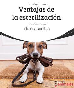 Ventajas de la esterilización de mascotas  ¿Tu perro esta castrado? Encuentra en este artículo todo lo que tienes que saber sobre la esterilización de mascotas.