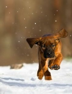 Puppies Galore: Photo