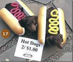 wiener dog---I'll take a few....