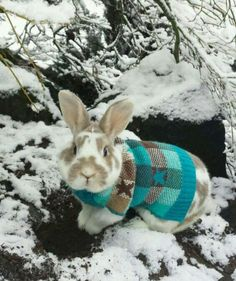 OMG! Love the bunny wearing the cute sweater