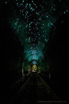 Helensburgh Metropolitan Tunnel glowworms out
