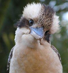 Смешное видео: домашняя птица имитирует устрашающий злодейский смех https://joinfo.ua/leisure/animals/1223293_Smeshnoe-video-domashnyaya-ptitsa-imitiruet.html