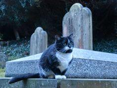 cemetery in Tunbridge Wells