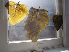 The leaves I used to make the prints themselves are part of the show as they pick up the sun and hint of warmer times then now. It's been sub zero in Cleveland off-and-on for weeks. Robert Doisneau, Sub Zero, Home Deco, Be Still, Ink, Gallery, Prints, How To Make, Blog