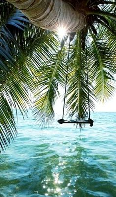 Beautiful tropical tree swing.