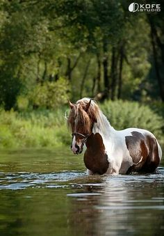 Beautiful pinto horse in the water. All The Pretty Horses, Beautiful Horses, Animals Beautiful, Painted Horses, Farm Animals, Animals And Pets, Cute Animals, Majestic Horse, Horse Pictures