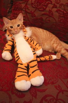 tiger kittie costume halloween costume