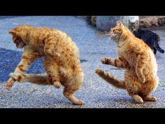 Funny Cats Compilation 2016 | Cat fails 2016 | Funny pets #8