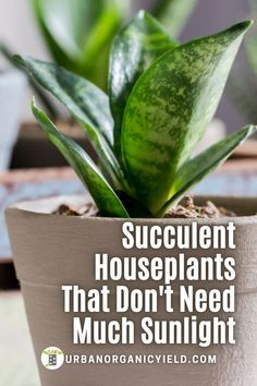 Some succulents do not need much sunlight to grow. This is our list of 17 succulents that can grow with very little to low-light conditions indoors or outdoors. #IndoorGarden #Succulents… More