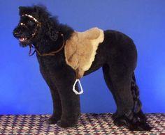 Horsebackdog