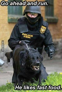 Now this K-9 definitely means business. Police or Law Enforcement Officers usually requires the help of a man's best friend since they are really dependable and are highly trainable. K-9 are very tough but can also be adorable specially when they know that they are not on guard and they are loyal as well.