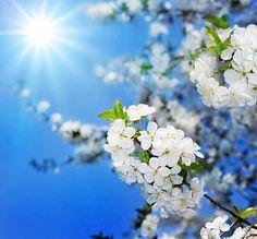 весна природа - Поиск в Google