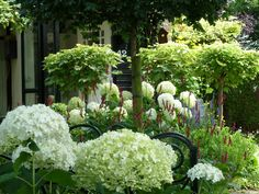 Summer garden via In míjn tuin .... White hydrangea would be a beautiful addition to our yard.