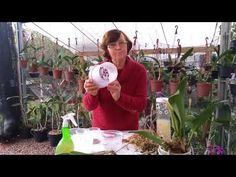 Youtube, Facebook, Floral, How To Replant Orchids, Garden In A Bottle, Compost, Desert Rose, Flower Arrangements, Red Carpet