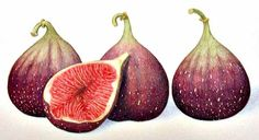 turkish figs | Illustrated using watercolor with watercolor … | Flickr