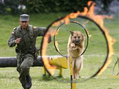 Colombian police dog and its handler