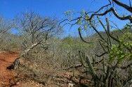 Biomas do Brasil - Caatinga #alcanceosucesso