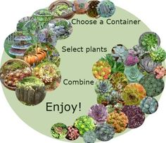 Succulents are so forgiving, they don't care what kind of container they're in - choose your container, pick some plants, combine, and ENJOY!  You'll never tire of the millions of different ways these plants go together - and the best part?  There are no bad combinations...