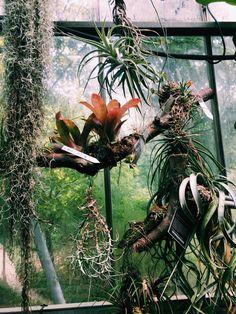 Amsterdam - Hortus Botanicus - Air plants - succulent Plant inspo Amsterdam Travel, Air Plants, Planting Succulents, Botanical Gardens, Amazing
