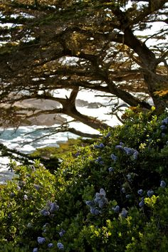 The most beautiful hike ever, Point Lobos, on central California's coast.