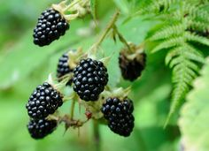 Top nuts, seeds and berries to forage for in September | Countryfile.com