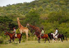 Horseback Riding with Giraffes - Ant's Nest, South Africa. #JetsetterCurator