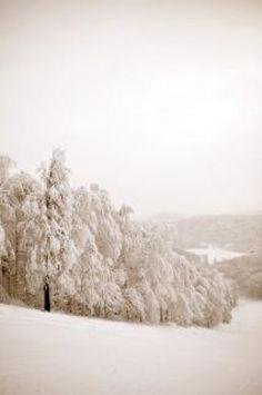 Winter scene, wilderness
