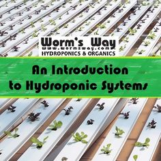 Just diving into Hydroponics? Check out this intro to the different hydroponic systems out there!