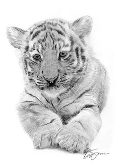 Drawing of a tiger cub - pencil drawing print - artwork signed by artist Gary Tymon - 2 sizes - big cat art - portrait - wildlife art - Pencil drawing graphic print by an Indian Bengal Tiger Cub UK artist Gary Tymon. Original artwork w - Cubs Tattoo, Tiger Tattoo, Tattoo Cat, Big Cats Art, Cat Art, Animal Drawings, Pencil Drawings, Drawing Animals, Tiger Sketch