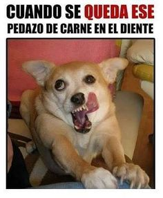 Dogs are just awesome. They are so cute and funny at the same time. Here are some hilarious Dog Memes. Memes Humor, Dog Memes, Funny Memes, Haha Funny, Funny Cute, Funny Dogs, Freaking Hilarious, Funny Stuff, Funny Animal Pictures