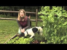Arugula - Plant, Care, and Harvest. Find out more information at http://www.finegardening.com/video/homegrown-homemade-how-to-plant-arugula.aspx