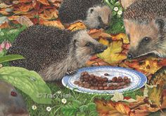 Hedgehog painting mounted 8 x 10 ART PRINT by Tracy Hall   eBay