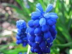 tall blue pieces in arrangements  http://wallpapersget.com/wp-content/uploads/2013/01/Blue-Flowers1.jpg