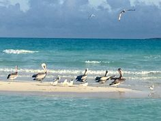 Family friends beach moments Friends Family, Cuba, In This Moment, Bird, Beach, Animals, Animales, The Beach, Animaux