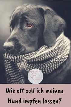 Are annual vaccinations really necessary? Rhodesian Ridgeback, Cute Dogs, Pets, Movies, Poster, Cookie, Lifestyle, Blog, Fashion