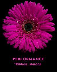 Favorite color & flower!!! Magenta Gerber Daisy