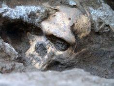 Crani N5 Dmanisi