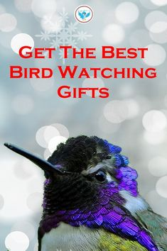 There are lots of great bird watching items to give someone for Christmas, as a gift that will be enjoyed all year. Penguin Bird, Penguin Craft, Bird Watching Gifts, Bird Feeding Station, Raising Goats, How To Attract Hummingbirds, Viewing Wildlife, Baby Penguins, Humming Bird Feeders
