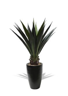 Artificial Agave Plant in Tall Contemporary Container Agave Plant, Artificial Succulents, Container, Contemporary, Plants, Planters, Canisters, Plant, Planting