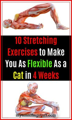 10 Stretching Exercises to Make You As Flexible As a Cat in 4 Weeks - My Amazing Stuff Flexibility plays a more important role in our well-being than we may realize. Experts believe that good flexibility helps you to achieve better results in Health And Wellness, Health Tips, Health Fitness, Fitness Diet, Health Care, Yoga Posen, Back Exercises, Flexibility Exercises, Natural Cures