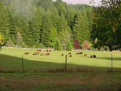 Cows and sheep on pasture by Farm Stay US, via Flickr
