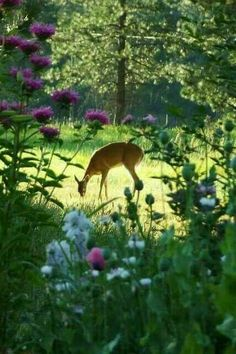 Deer in forest clearing