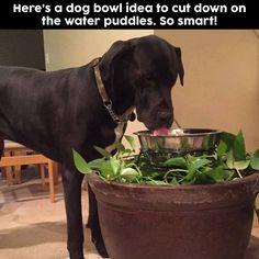 Help control dog water dish overflow w/ planter.