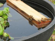 """Water Garden by lstarlet - """"My bees wouldn't stay out of my dog's watering bowl and not only were they annoying her but they were drowning in large numbers. (...) So then I turned a medium sized pot into a water garden with plants and a piece of wood for them to land on. The bees are loving it! Every time I have gone to check on it there are 20+ of them drinking. Since I have set up the garden I have not found a bee in the dog bowl.."""""""