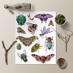 Watercolor insect poster by Martha Iserman aka Big Red Sharks Studios Biology Test, Insect Orders, Trapper Keeper, Honey Label, Field Museum, Zoology, Sharks, Whimsical, Insects