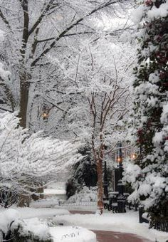 Enjoy beauty year round. Planting evergreens not only gives your garden variety, structure, and interest, they keep their shape all year long. Watch the snow pile up on their branches as your garden becomes a beautiful winter wonderland.