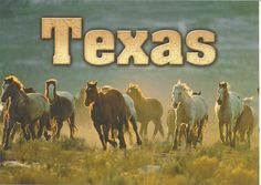 Texas Horses by VeryHappyHomemaker-Angee at Postcrossing, via Flickr