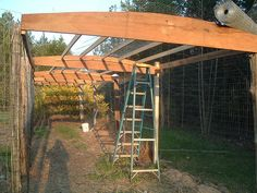 """a chicken run that looks like a pergola from a distance totally enclosed with wire fencing on all sides, including the bottom, so that predators can't dig their way in. Big enough that four or six chickens can't eat everything inside it. Let the chickens be almost """"free-range"""" while still safe. I would try to grow root vegetables inside, like potatoes, carrots, and beets, as well as other plants just for the chickens."""