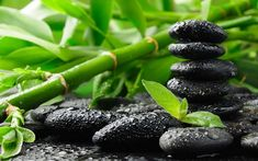Black stones and bamboo / 2560 x 1600 / Macro / Photography ...