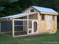 Chicken coop...but would make a cool dog house